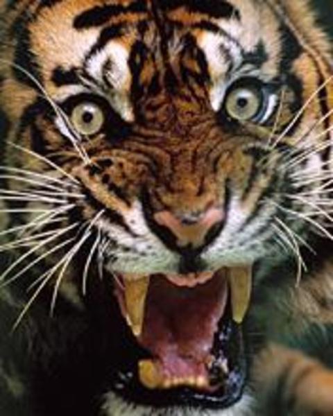JackGiambo Resident's Profile Image