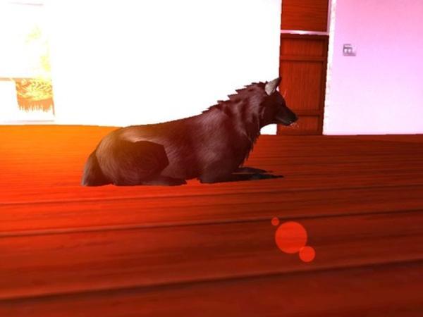 Runawolf Resident's Profile Image