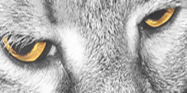 Slick Fretwerk Profile Image